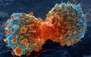 cancer660