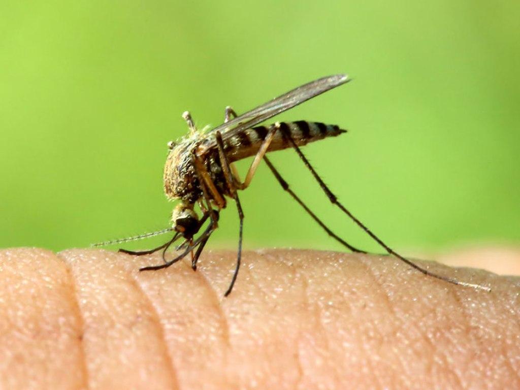 Картинки комары и мошки, мне очень хорошо