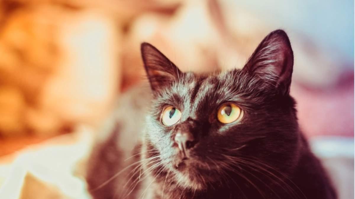 58217403e6fe Μια νέα έρευνα ήρθε να επιβεβαιώσει αυτό που αρκετοί άνθρωποι που έχουν  γάτα στο σπίτι ήδη γνωρίζουν. Ειδικότερα οι κατοικίδιες γάτες μπορούν να ...